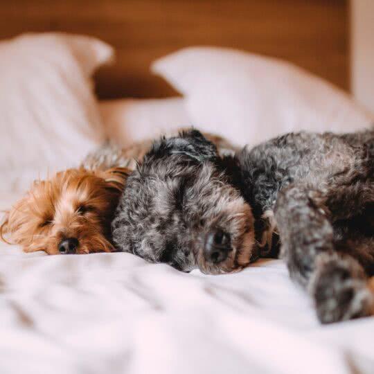Pets: quanto você gasta com os seus animais de estimação?